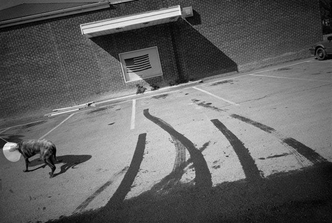 "Richard Edelman, ""Brown Dog, Woodstock"", 2002, Archival Pigment Print."
