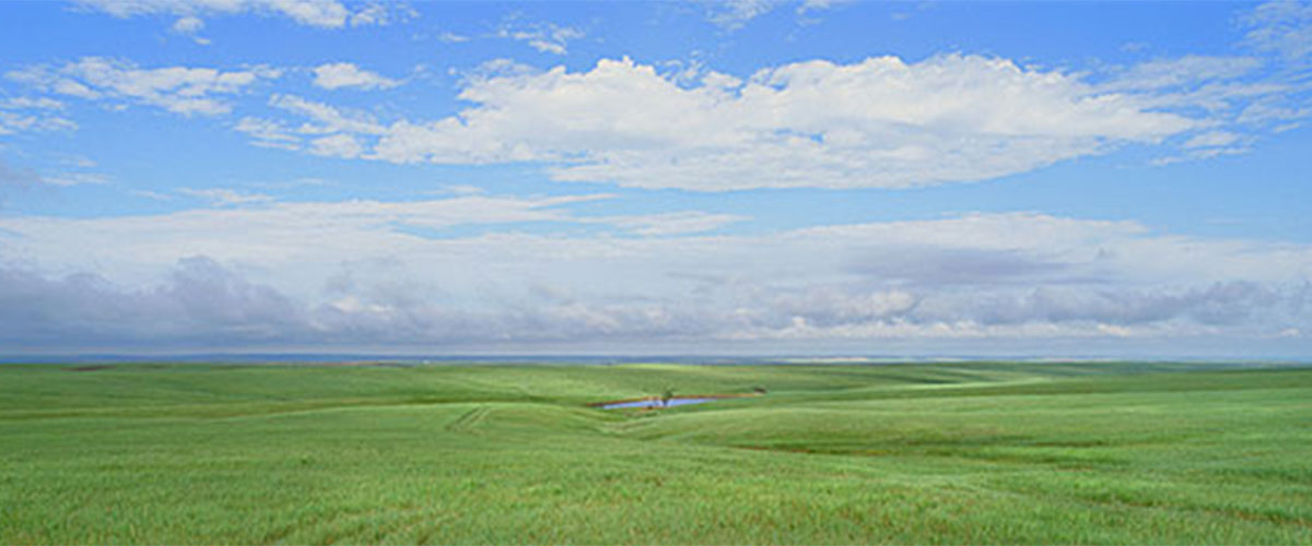 "Brent W. Phelps, ""#13 Ft. Pierre National Grasslands"", Stanley County, South, Dakota, 1997, ed#2/27, 12x36"