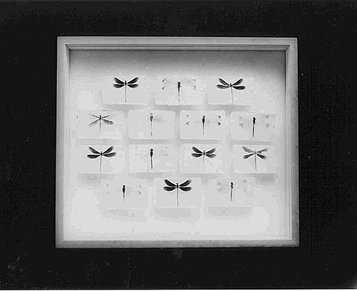 """Box IV Odonata, Dragonfly from Good-bye Paradise"", 1993/2000, Liquid Light on Rice Paper"