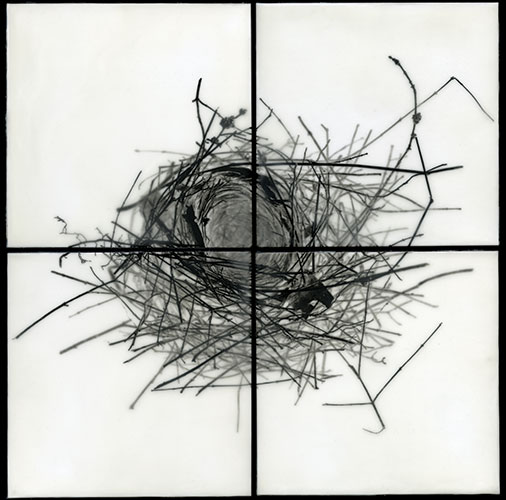 "Christa Kreeger Bowden, ""Nest I"", from the series ""Roots & Nests"", 2009, archival pigment prints and encaustic, 16x16""."