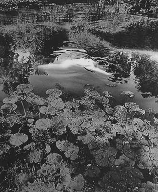 "Eikoh Hosoe, ""Black Water Lily #2"", 1992, 14½ x 11"" gsp, courtesy Howard Greenberg Gallery, NYC"