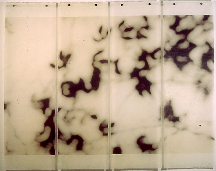 "Jeri Eisenberg, ""Vine"", 2005, pigmented Inkjet on Kozo Paper w/ Encaustic, 36 x 44 ½"""