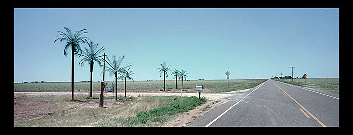 "Andrew Liccardo, ""Plastic Palm Trees at the Entrance to the West Texas Palm Tree Company. New Home, Texas."", 2006, archival inkjet print."