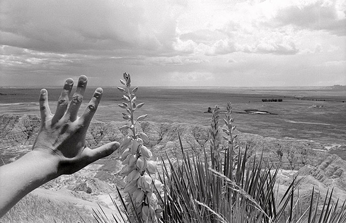 "Rachel Mackow, ""Yucca, the Badlands, South Dakota"", 2000, gelatin silver print."