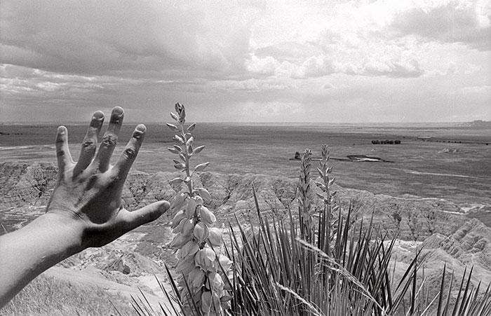 "Rachel Mackow, ""Yucca, the Badlands, South Dakota"", 2000, gelatin silver print."
