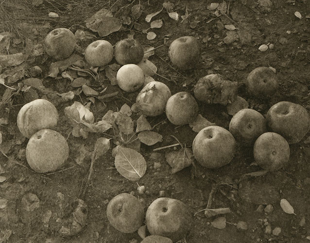 "Tanya Marcuse, ""Untitled#19"", 2006, from the series ""Fruitless"", Platinum/Palladium Print, 5x4"""