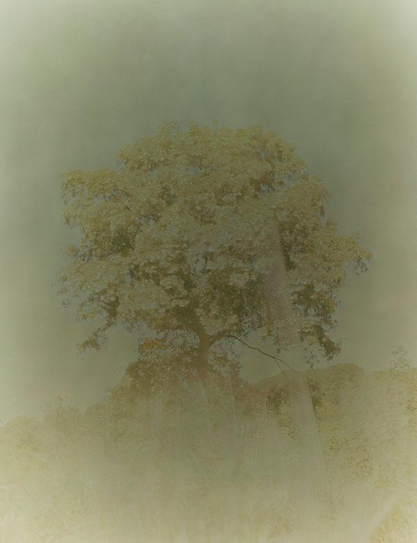 """Junsik Shin, """"NaMu 4"""", 2005, c-print."""