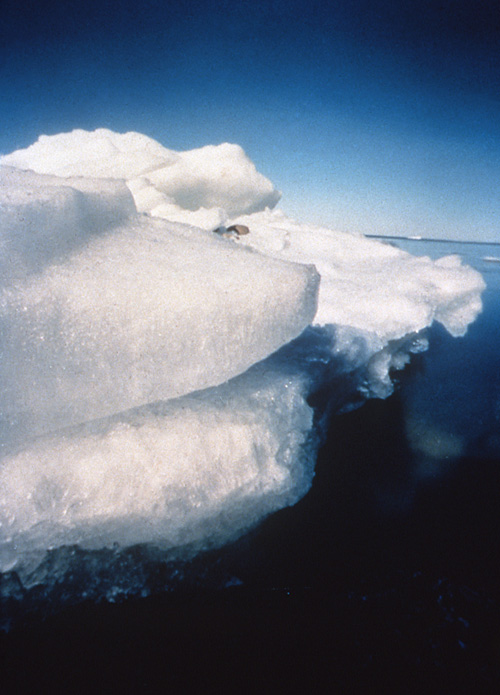 Victoria Veenstra, Edge Ice, color photograph, 1996, 20x16'
