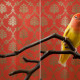 "Claire Rosen, ""Peach-Faced LoveBird No.7523"", 2012 and ""Wallpaper No. 7518"", 2012, diptych, archival pigment prints, 60x80""."
